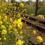 咲いて、枯れて、冬を凌ぎながら、また、春を待つ。