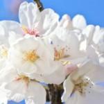 美魔女になった姥桜(うばざくら) ~綺麗な女性のための言葉