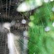 蜘蛛の巣!